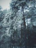 Forêt foncée, neige d'hiver Photo libre de droits