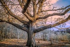 Forêt fonctionnante Images libres de droits