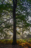 Forêt fraîche Photographie stock libre de droits