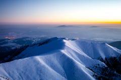 Forêt froide de l'hiver Photographie stock libre de droits
