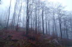 Forêt givrée Photographie stock