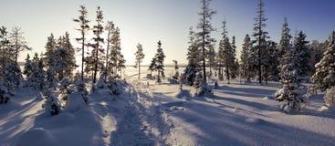 Forêt givrée Images libres de droits