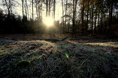 Forêt givrée image stock