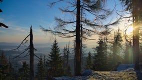Forêt givrée Images stock