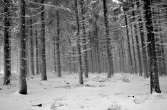 Forêt givrée en brume Photographie stock