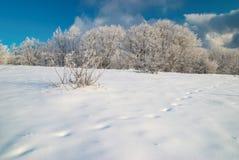 Forêt glaciale de l'hiver Photo libre de droits