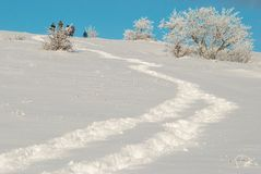 Forêt glaciale de l'hiver Images libres de droits
