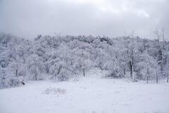 Forêt glaciale de l'hiver Photo stock
