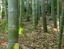 Forêt-groupe en bambou photos stock