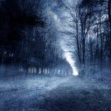 Forêt hantée Image stock
