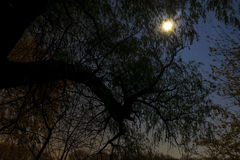 Forêt hantée la nuit Image stock