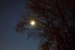 Forêt hantée la nuit Images stock