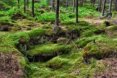 Forêt-HDR primitif Image libre de droits