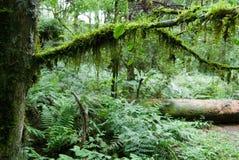 Forêt humide Photo libre de droits