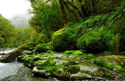 Forêt humide abondante Images libres de droits