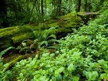 Forêt humide abondante photo stock
