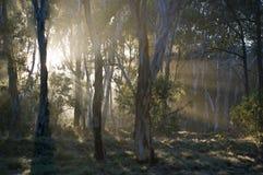 Forêt humide, Australie. images libres de droits