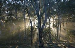 Forêt humide, Australie. Image stock