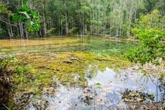 Forêt humide avec le flottement du marais de lac de nature de l'eau Images stock