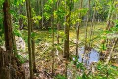 Forêt humide avec le flottement du marais de lac de nature de l'eau Photos libres de droits