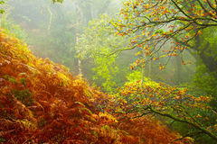 Forêt humide d'Exmoor Photo libre de droits