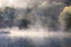 forêt humide de brouillard Images libres de droits