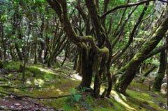 Forêt humide de La Gomera Photos libres de droits