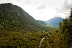 Forêt humide de la Nouvelle Zélande Photos stock