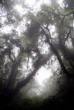 forêt humide de mystère Photographie stock libre de droits