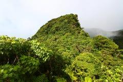 Forêt humide de saint Kitts Images libres de droits