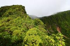 Forêt humide de saint Kitts Image libre de droits
