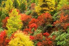 Forêt humide de Yunnan Images libres de droits