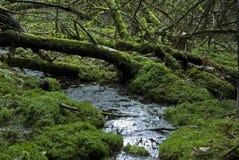 Forêt humide européenne photographie stock libre de droits
