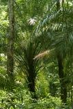 Forêt humide ou forêt tropicale Images libres de droits