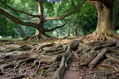 Forêt humide primitive Image stock