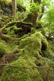 Forêt humide tempérée photo stock
