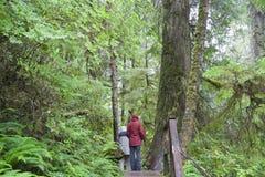 Forêt humide tempérée avec des gens sur la promenade photo libre de droits