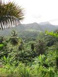 Forêt humide tropicale photographie stock libre de droits