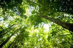 Forêt humide, vue en été Photo libre de droits