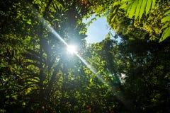 Forêt humide, vue en été Photographie stock