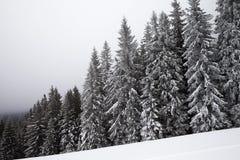 Forêt impeccable couverte de neige congelée dans le brouillard et la pente neigeuse Photographie stock
