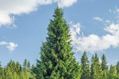 forêt impeccable de ciel bleu photographie stock