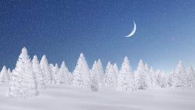 Forêt impeccable givrée la nuit chutes de neige Photo libre de droits