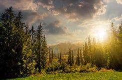 Forêt impeccable sur un pré dans haut Tatras Images libres de droits