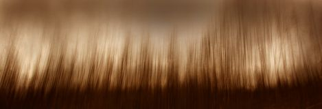 Forêt impressionniste photographie stock