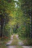 Forêt inégale d'été de chemin forestier Images libres de droits