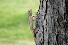 Forêt indo-chinoise se tenant toujours sur un arbre Photographie stock libre de droits