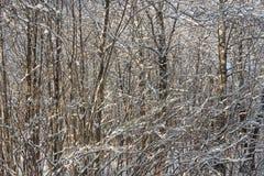Forêt infranchissable Photos libres de droits