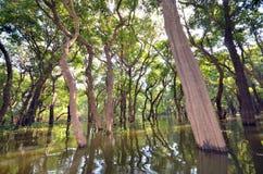 Forêt inondée Photographie stock libre de droits