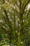 Forêt IV Image stock
